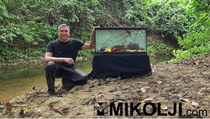 Mikolji wild aquariums category thumbnail