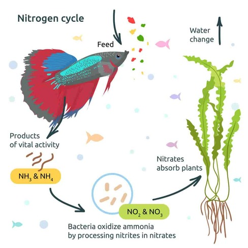 Nitrogen cycle explanation